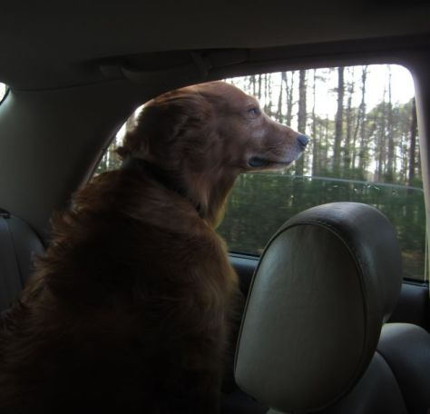 On the way to a local nursing home on Christmas Day 2012
