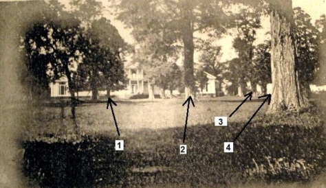 Trees that are still on the Bowling Green -picture date - 19061. Tree to be removed 2. Maple 3. Elm 4. Hickory