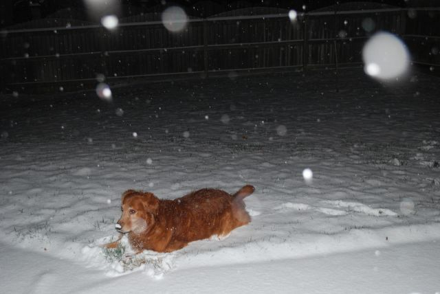 Hurley laying in the snow