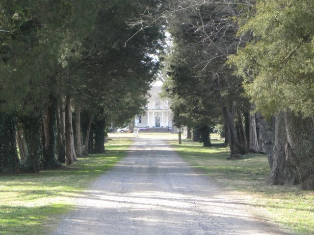 Looking down the current driveway towards the Mansion from the entry at Highway 301 (James Madison Highway)