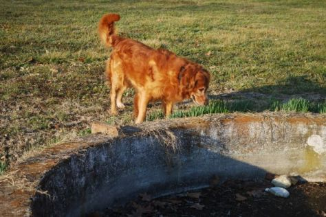 Hurley inspects the 1900 water fountain.