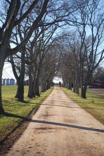 Westover PlantationDrive to Mansion