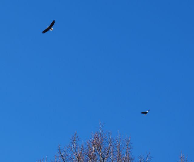 Eagles 0