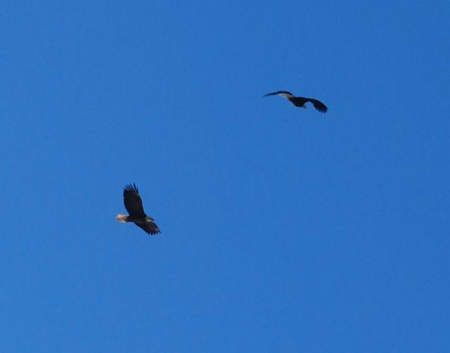 Eagles 11