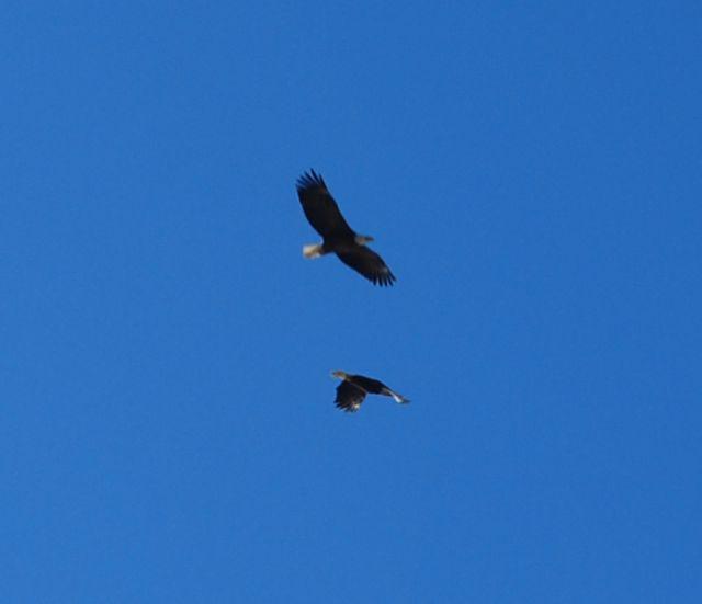 Eagles 12
