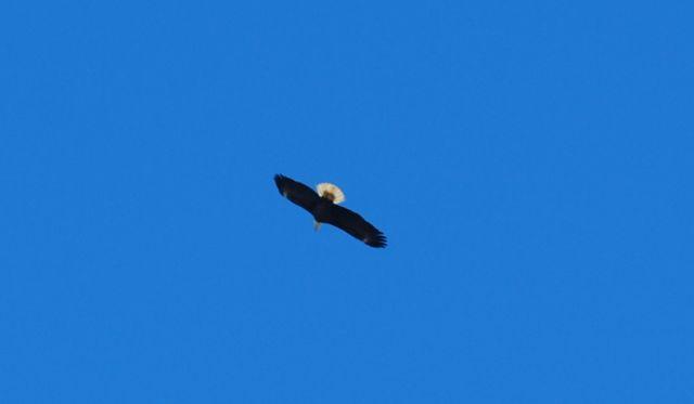 Eagles 2
