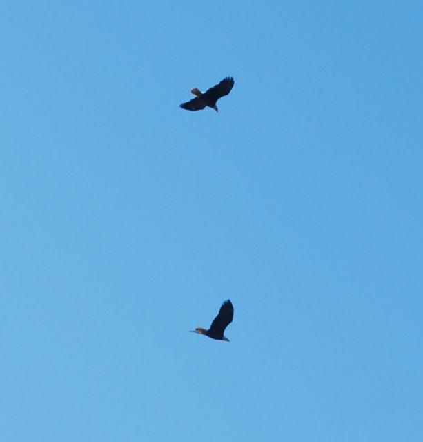 Eagles 5