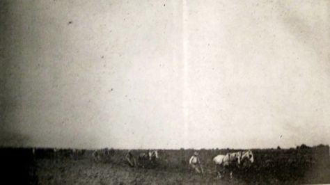 Teams plowing on the Walsingham Plantation1906