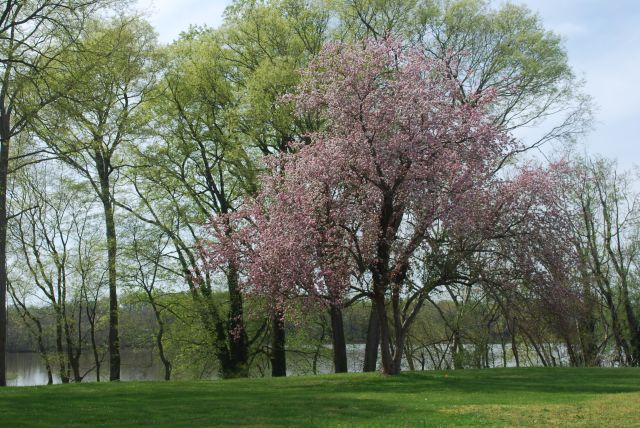 Spring has arrived at Belle Grove!